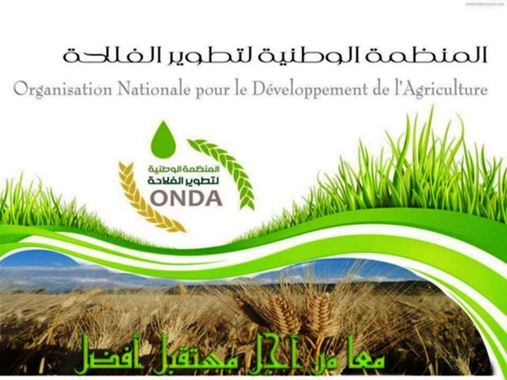 l u0026 39 organisation nationale pour le d u00e9veloppement de l u2019agriculture recrute  alg u00e9rie