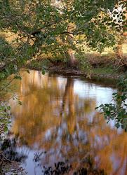 River Mint