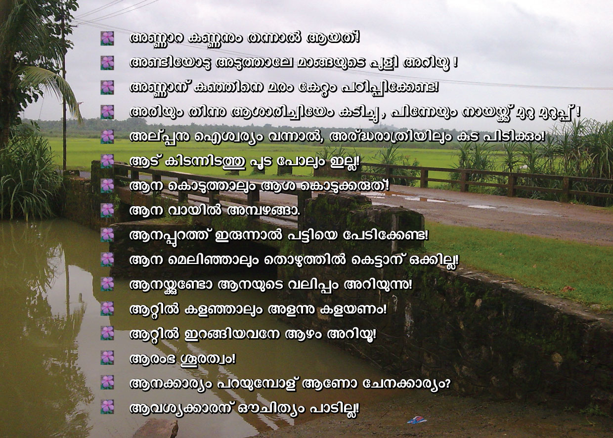 culture and education in malayalam The teachers about tribal culture and environment also force the tribal students to withdraw from education all these issues are emerging in their primary and high school levels.