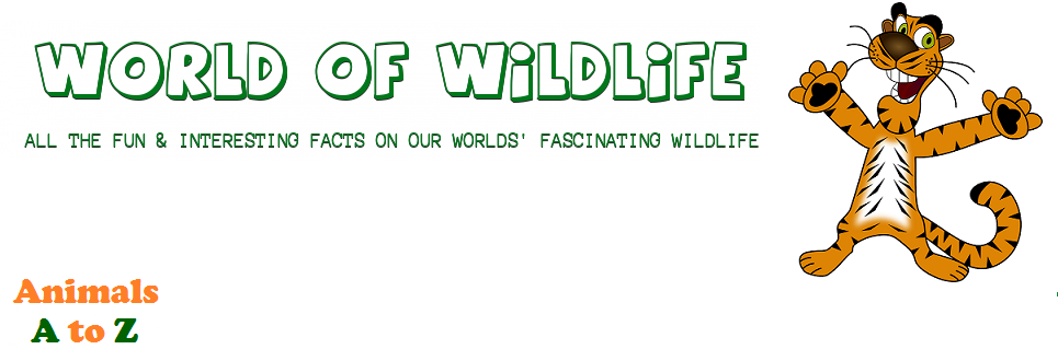 World of Wildlife