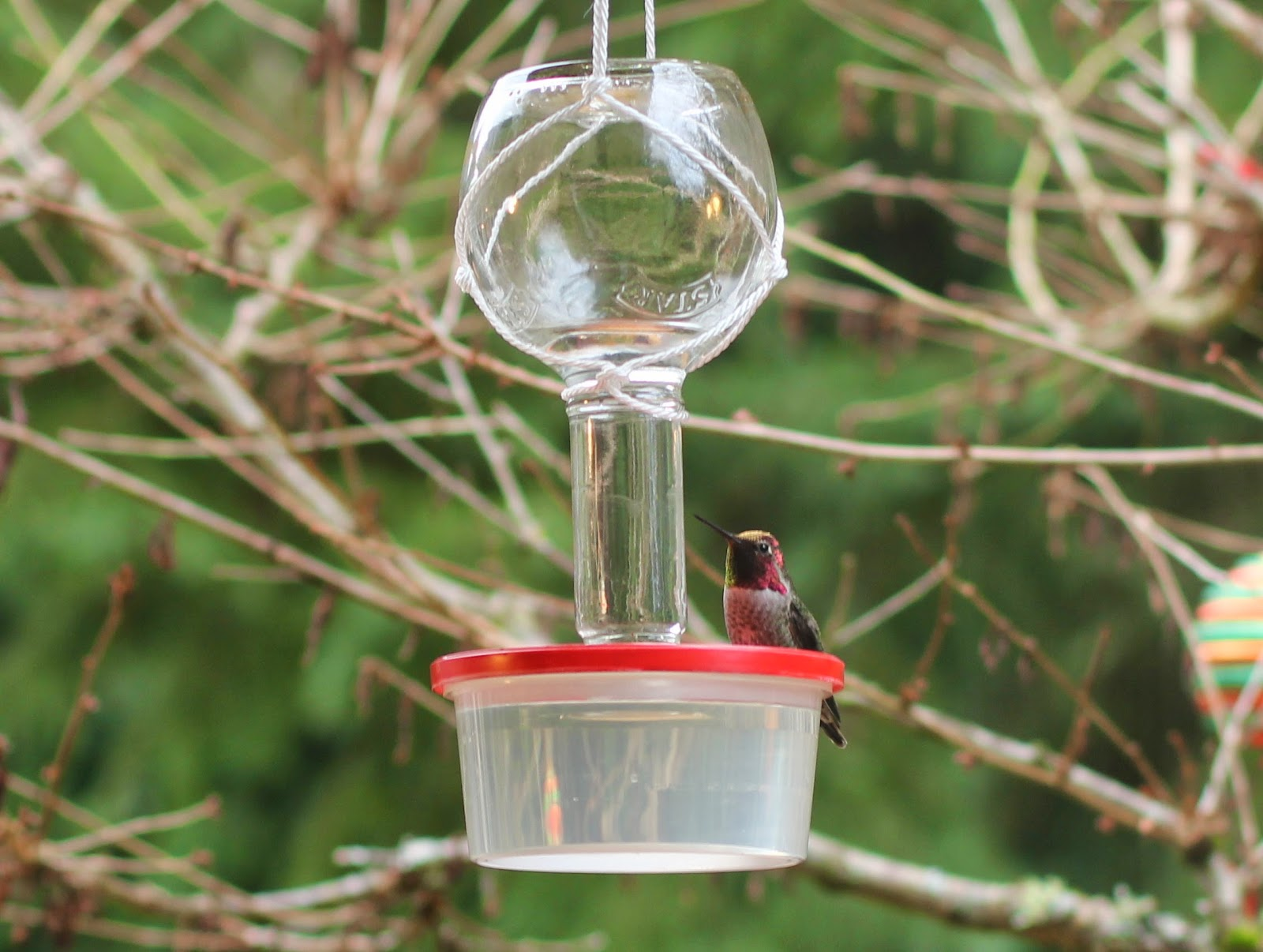 ounce hanging sweety feeder hummzinger dp ac hummingbird lil com ultra feeders amazon red aspects garden