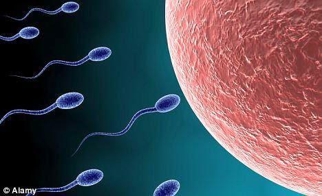 Mengenal Sperma dan Sel Telur