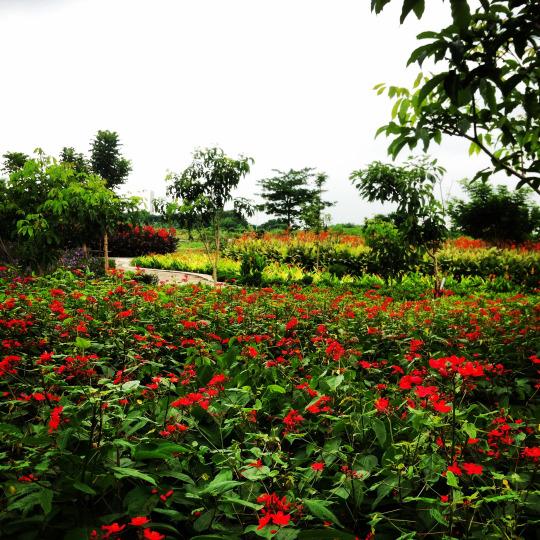 Taman Harmoni Keputih Surabaya, Taman Kota Berkelas Internasional