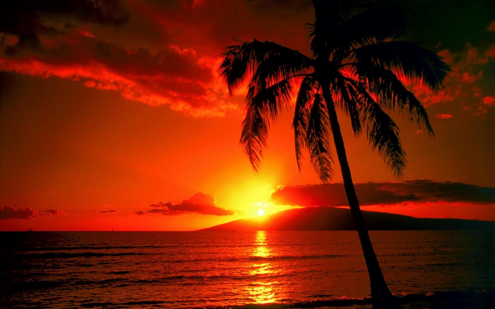 Mungkinkah  Matahari Terbit Dari Barat