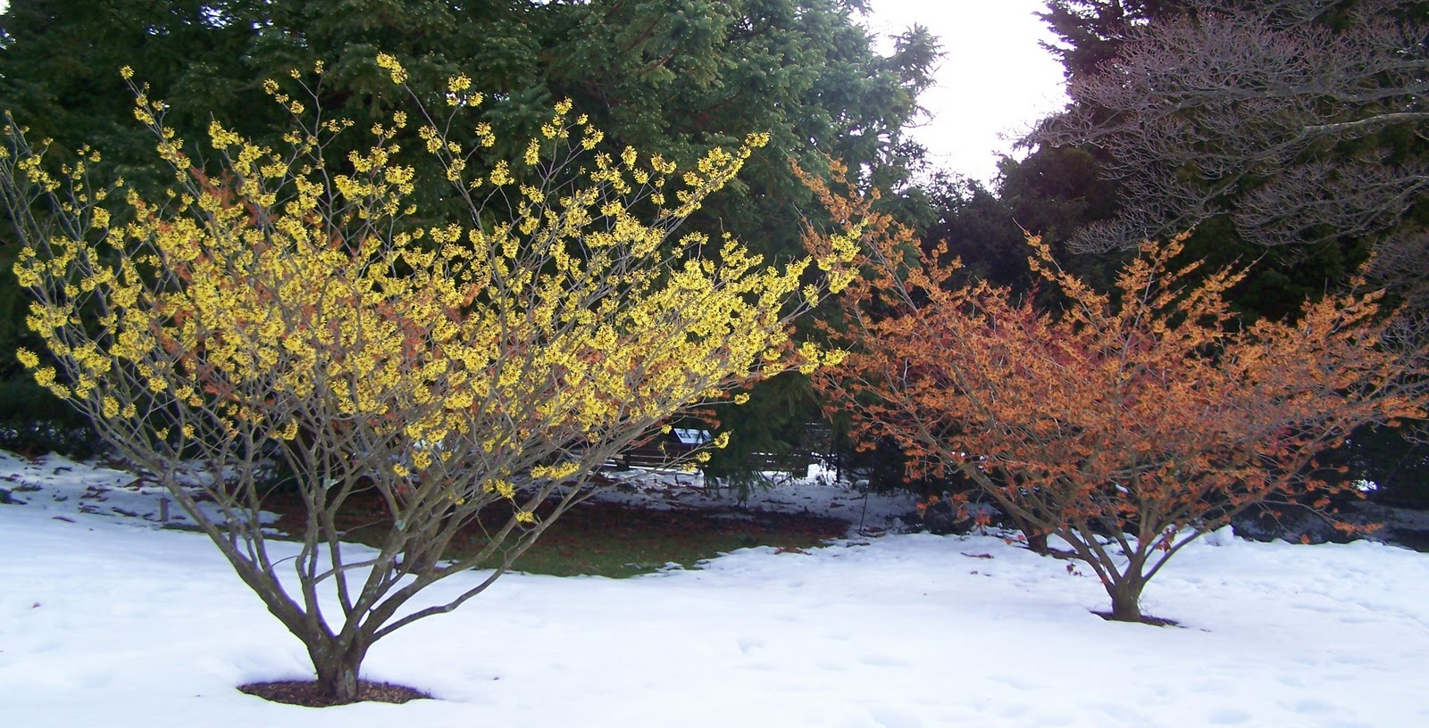 Franklin County Pa Gardeners Plants With Winter
