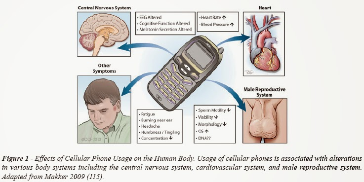 does cellular phone use contribute to cancer formation The abundance of literature suggests that targeting apoptosis in cancer is feasible  3 via the formation of a  could contribute to breast cancer cell.