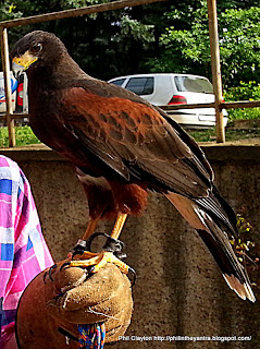 Veliko Tarnovo, Bulgaria Bulgarian association for preservation of hawks