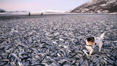 Muerte masiva de peces
