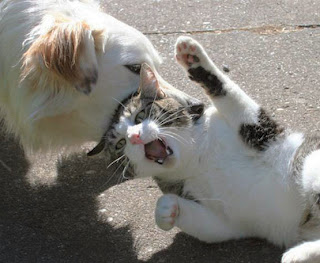 Funny Cat Fighting Dog