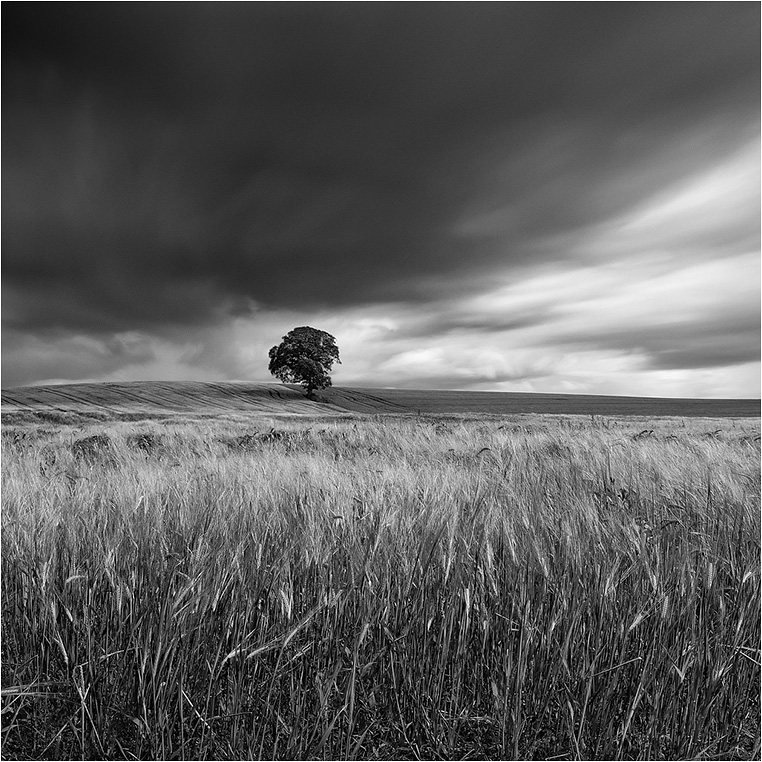 Emerging Photographers, Best Photo of the Day in Emphoka by Owen O'Grady