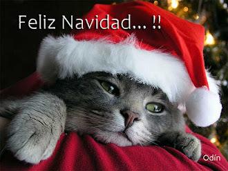 Gracias Odin, Felices Fiestas 2012