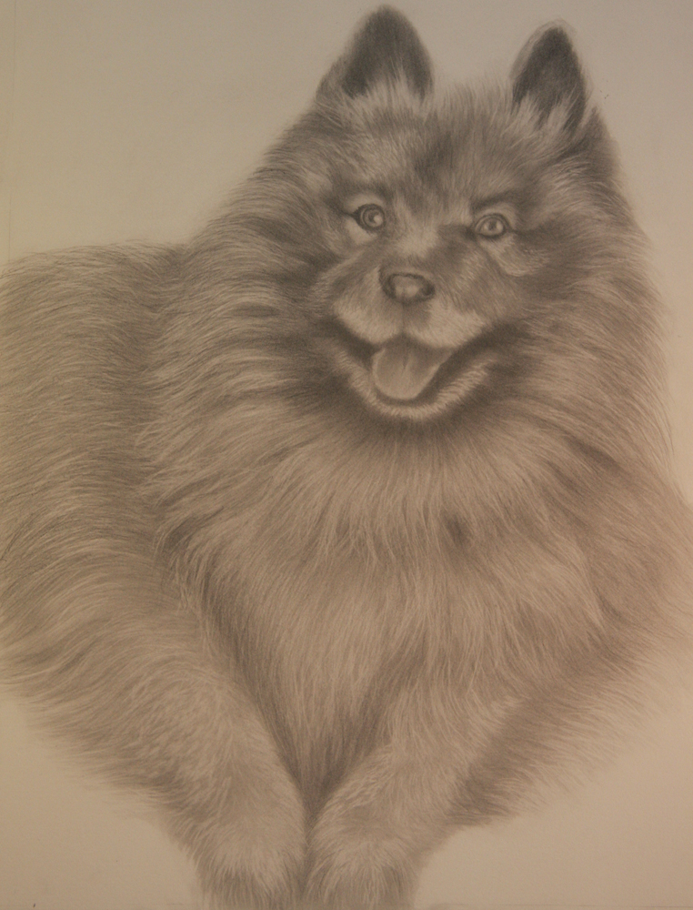 Graphite & Charcoal Porrait Commission of Dog  - Click on Image to Enlarge