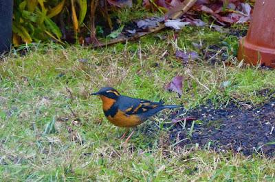Back Yard, Natural Garden, Eugene, Oregon, Winter