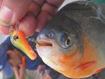 Tips Dan Trik Mancing Ikan Bawal