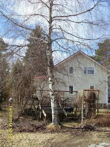 Pihakoivujen ja pihapuiden kaataja Olavi Lehto palveluksessanne. Ottakaa yhteyttä sähköpostilla