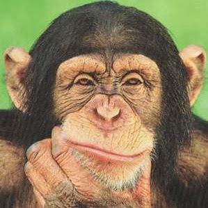 Top 5 weird facts about chimpanzees