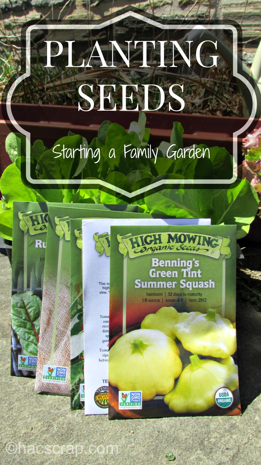 How to plant a family garden using organic seeds