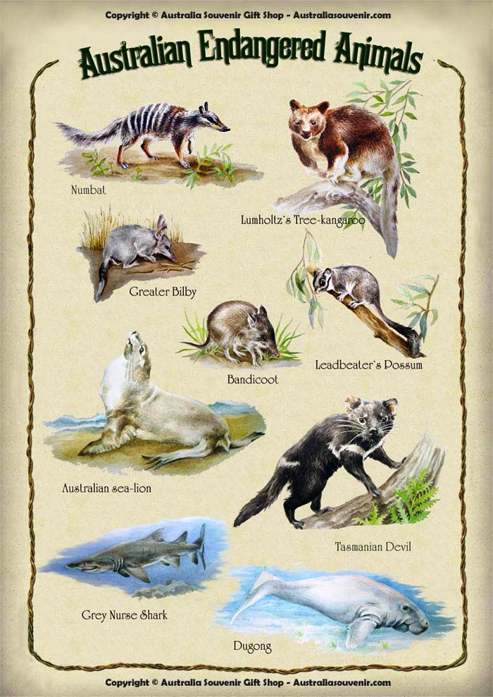 endangered the classification of endangered is used for species atEndangered Species With Their Names List