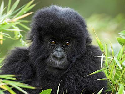 Khỉ con đáng yêu