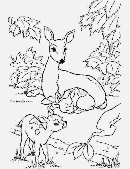 deer coloring pages coloring pictures of deer free coloring pictures