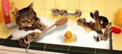 Como educar a tu gato como ba ar a tu gato - Banar gatos ...