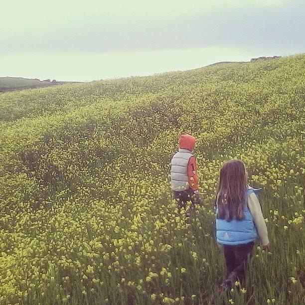 Through the fields - Cinigiano in spring