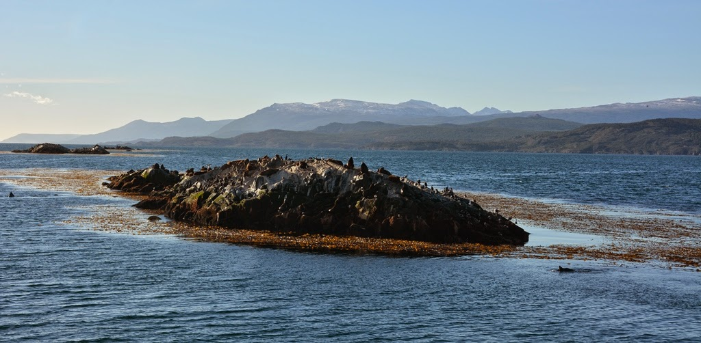 Beagle Canal Ushuaia sea lion rock
