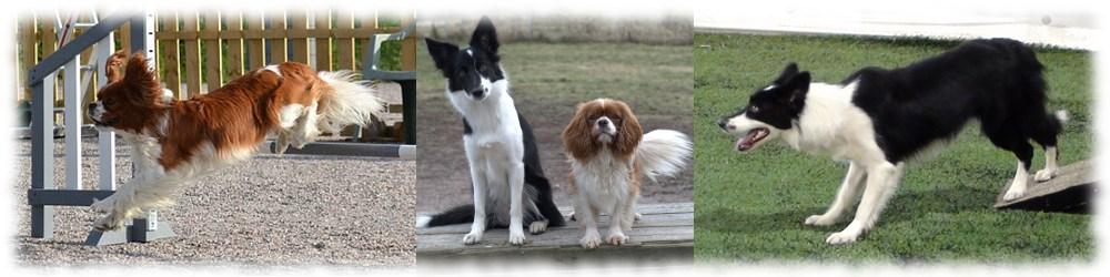 Luca & Leia