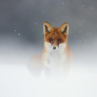 Fotografias de animales salvajes 53