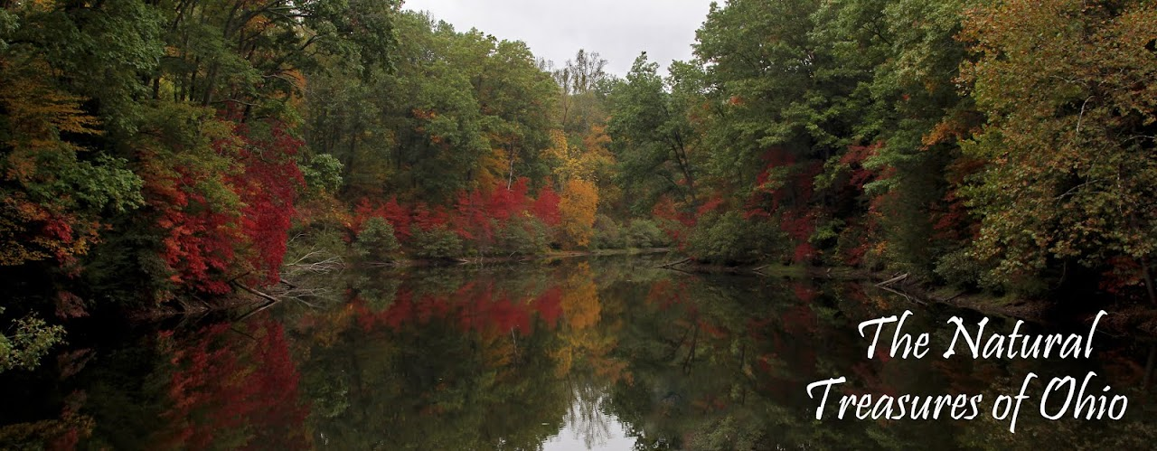 The Natural Treasures of Ohio