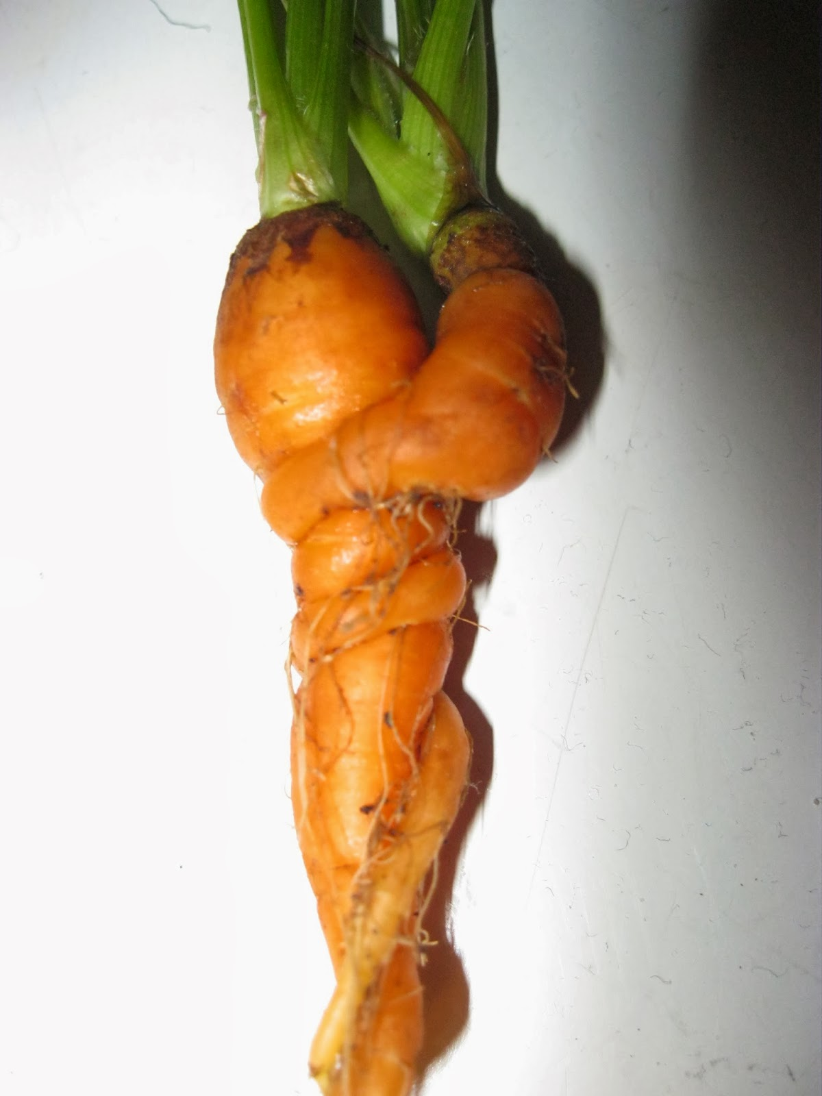 Pity, that Carrot in anus topic