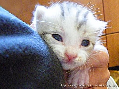 仔猫の目が開く