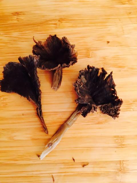 Finnish funnel chanterelle or winter mushroom