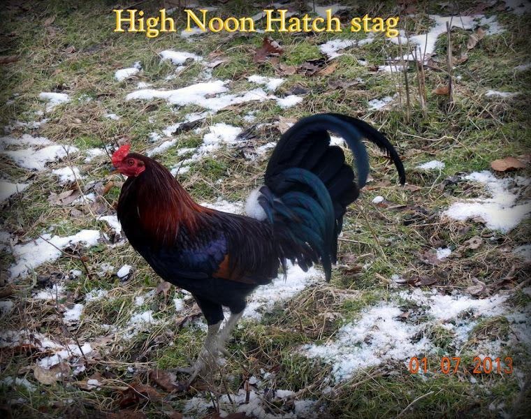 High Noon Hatch stag