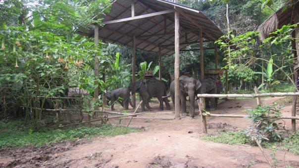 タット・セーの象(ルアンパバーン)