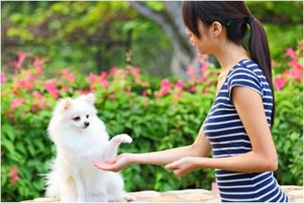 Rewards to Your Dog