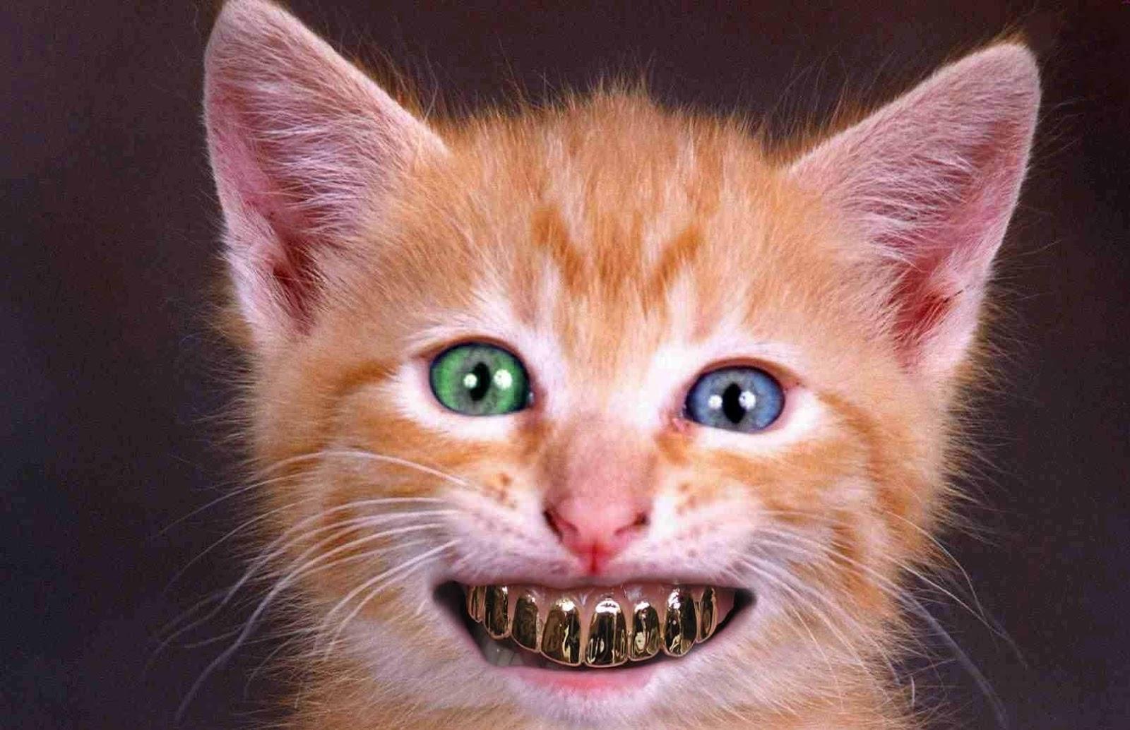 aloe toxic to cats