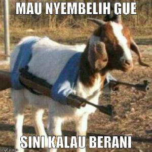 Kumpulan meme lucu qurban kurban terbaru dan gambar Idul Adha 2015