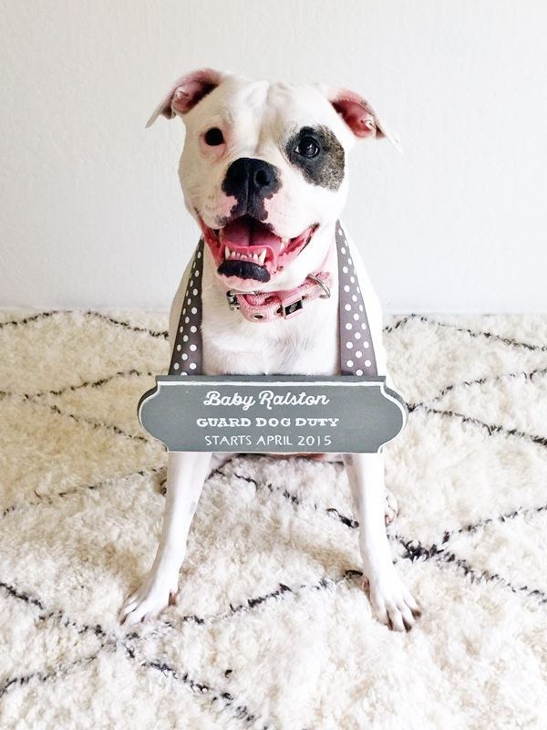 Pregnancy announcement with baby guard dog duty sign for dog