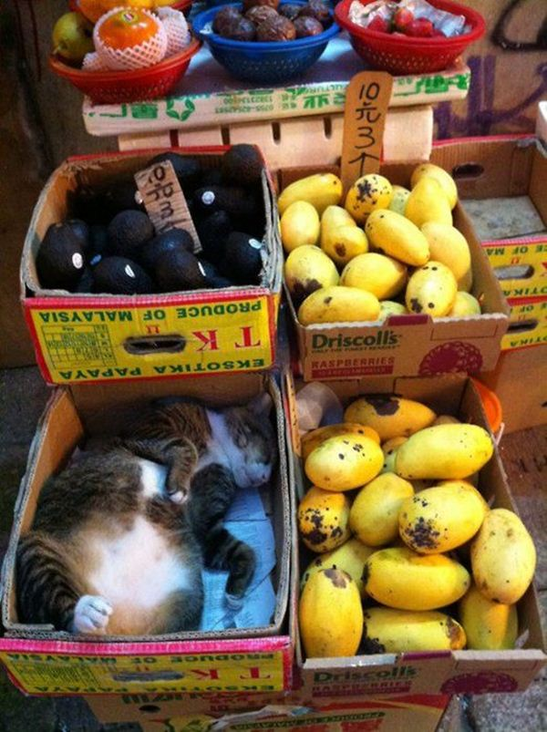 Funny cats - part 40, funny cats, funny cats photos, cat pictures