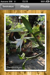 orchidée entretien