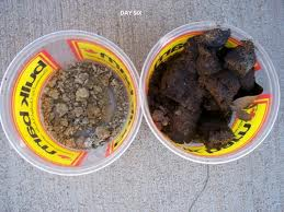 Dogs Eating Raw Food Poo