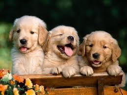 Puppy Care
