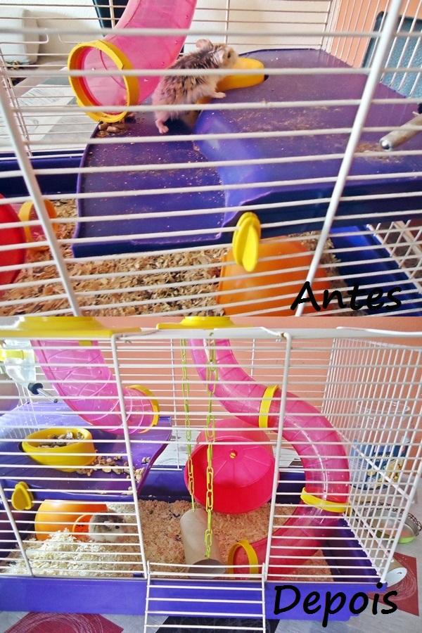 hamster gaiola suja e limpa