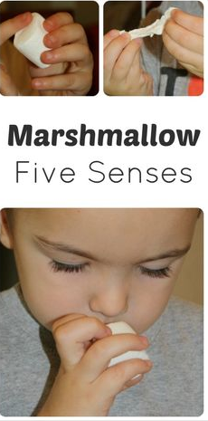 http://www.fantasticfunandlearning.com/exploring-marshmallows-with-the-five-senses.html