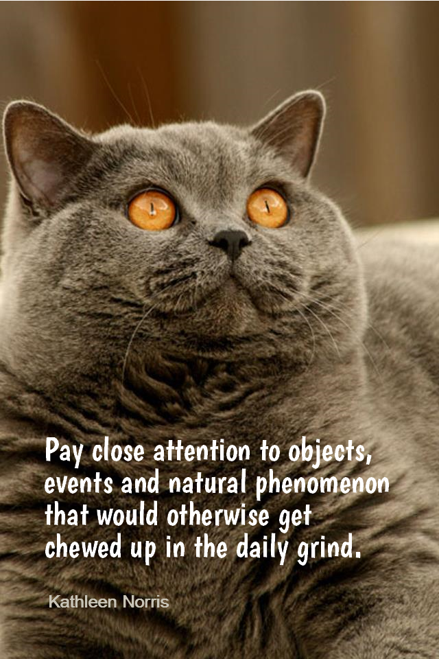 visual quote - image quotation for Awareness - Pay close attention to objects, events and natural phenomenon that would otherwise get chewed up in the daily grind. - Kathleen Norris