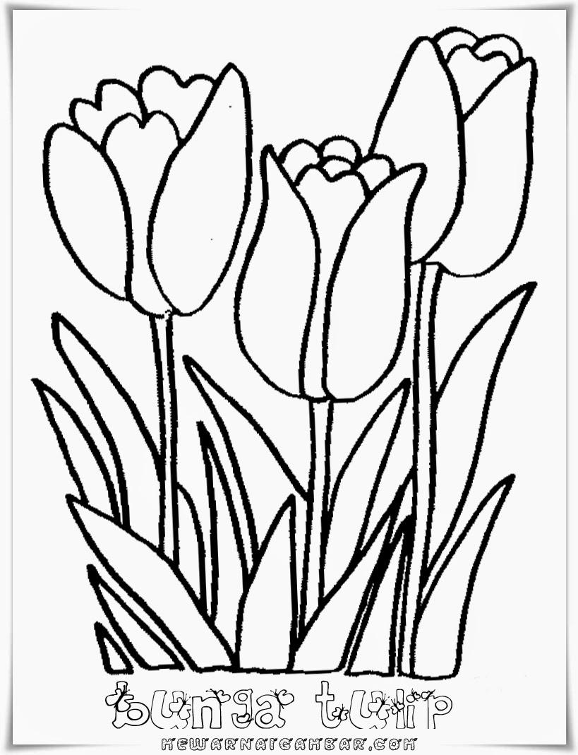Mewarnai gambar bunga tulip