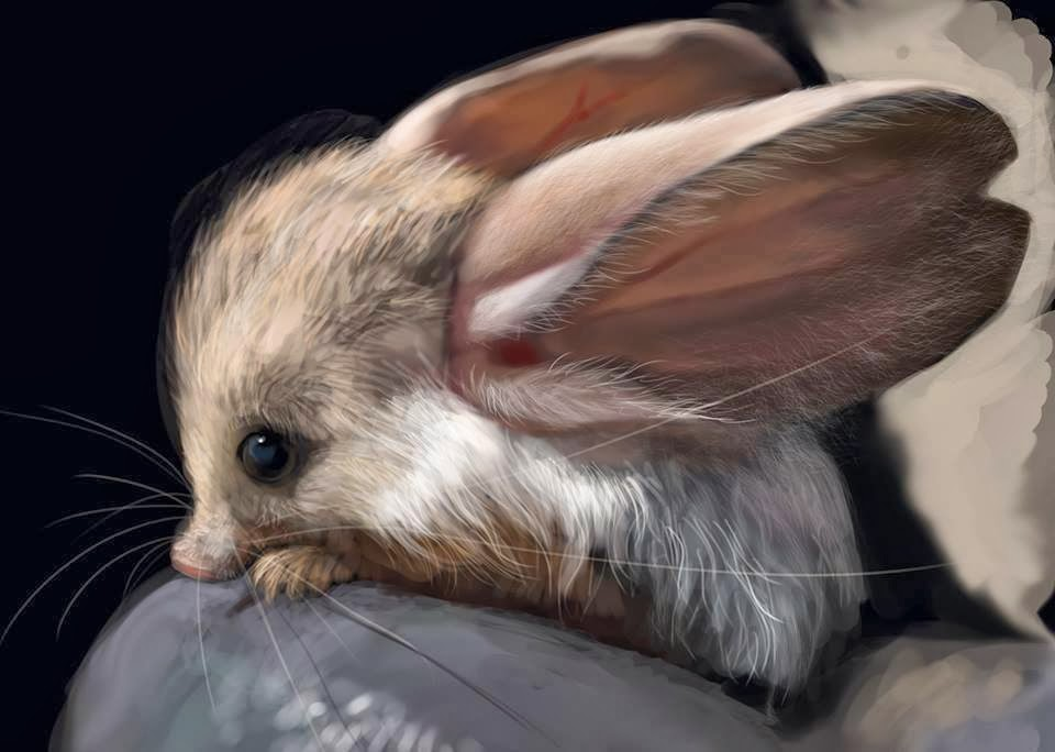 nocturnal mouse, rodent