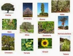 Padep d for Plantas medicinales y ornamentales