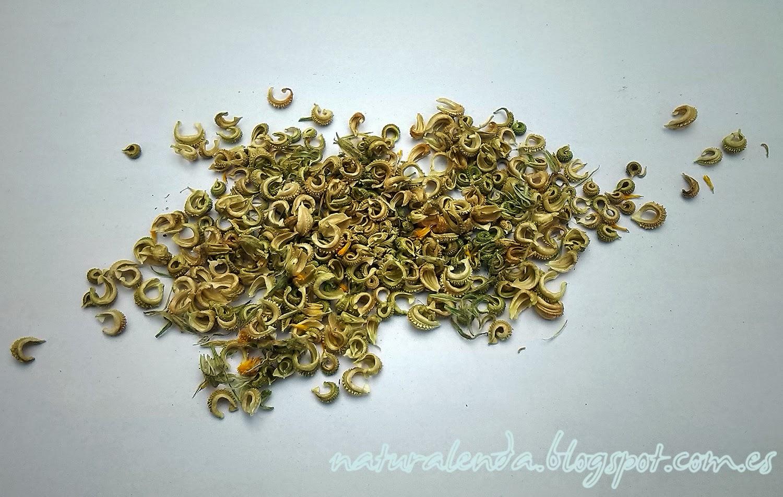 semillas de calendula